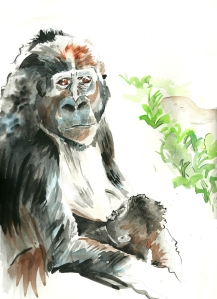 Nursing Gorilla (watercolor)