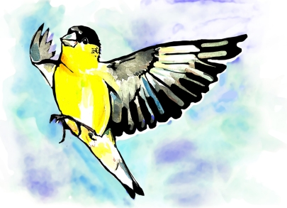 goldfinch, watercolor, cheerful bird, black and gold, flying bird, blue sky, pittsbird